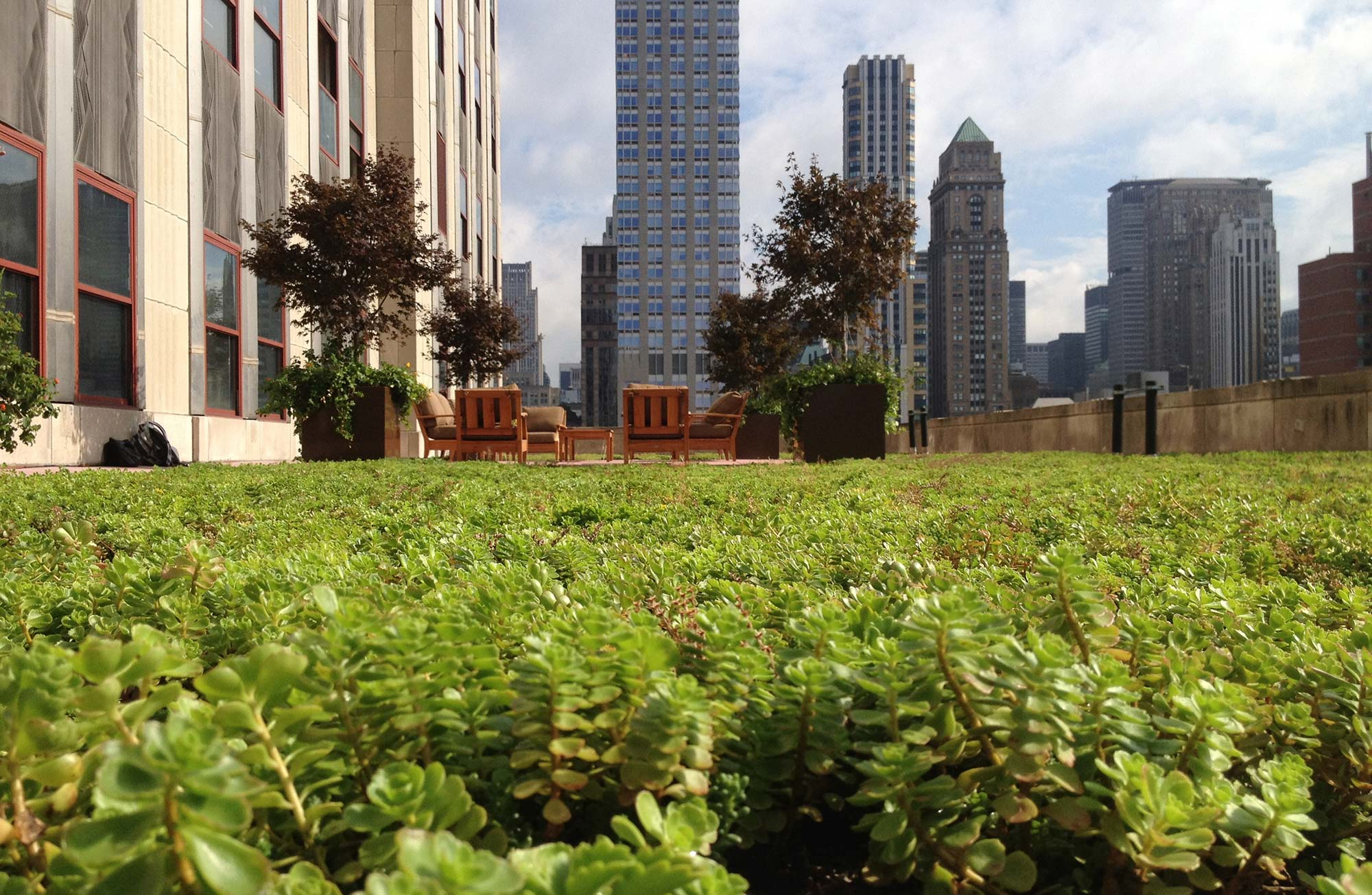 Testing the wind performance of vegetated roofs
